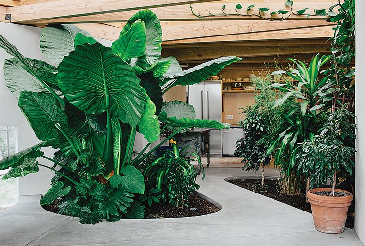 indoor and outdoor plants dubai