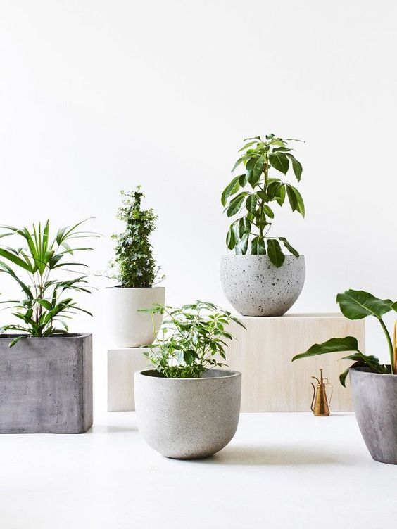 Concrete Pots Planters Desireign