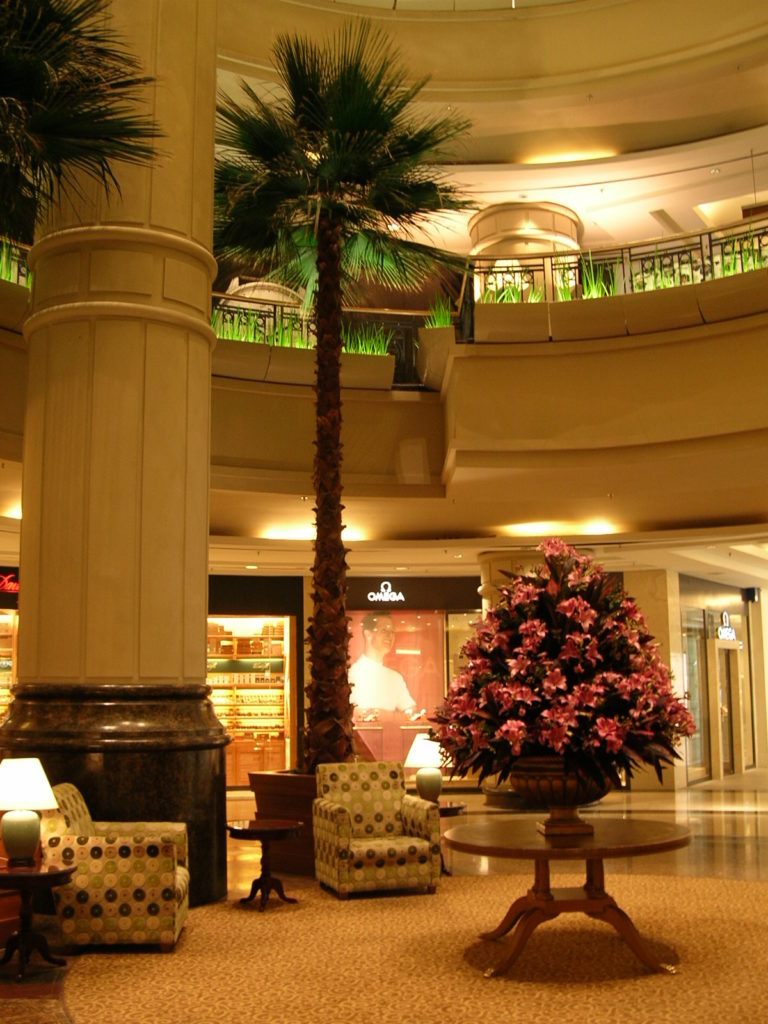 Indoor Commercial Preserved Palm
