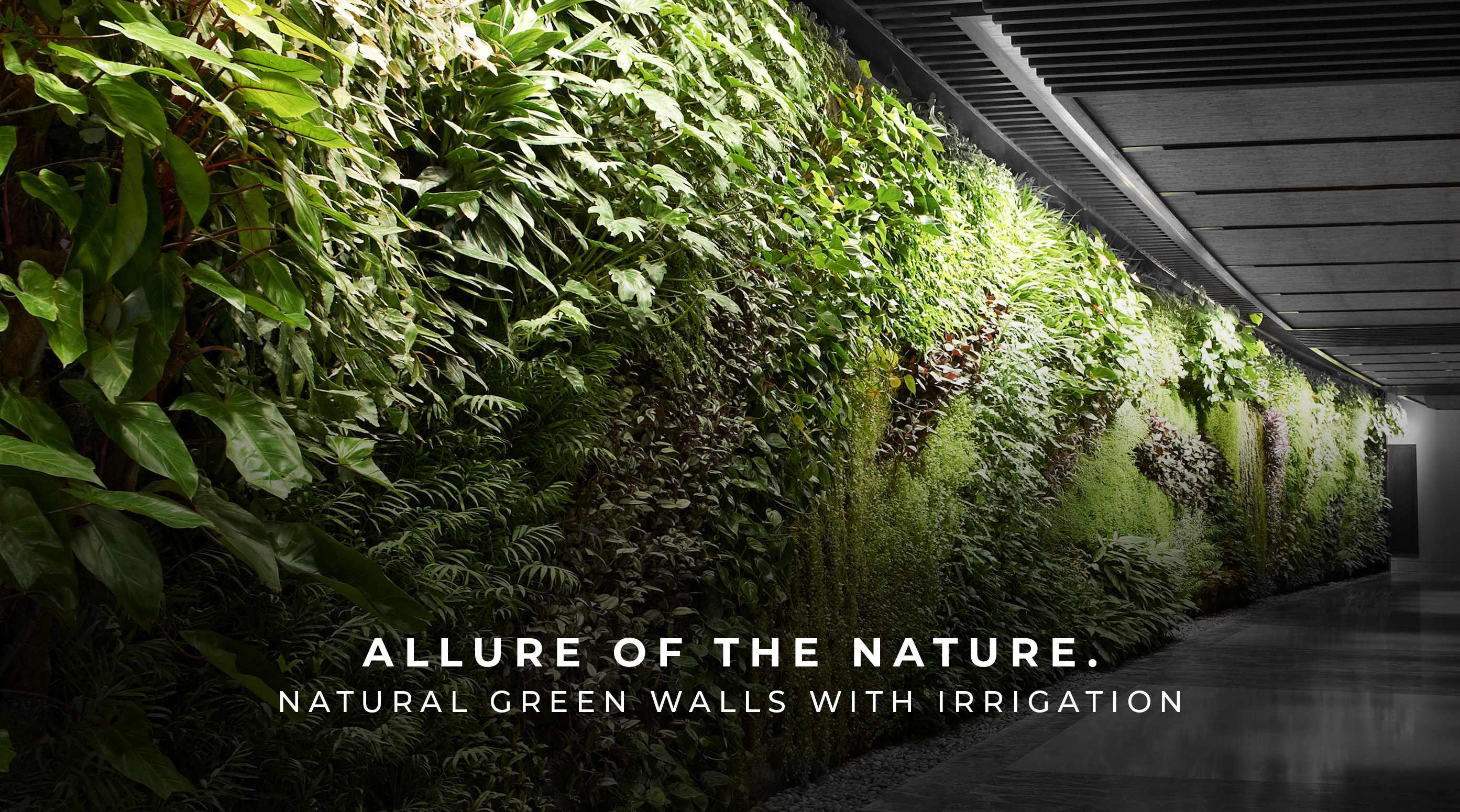 Natural Green Wall Desireign UAE