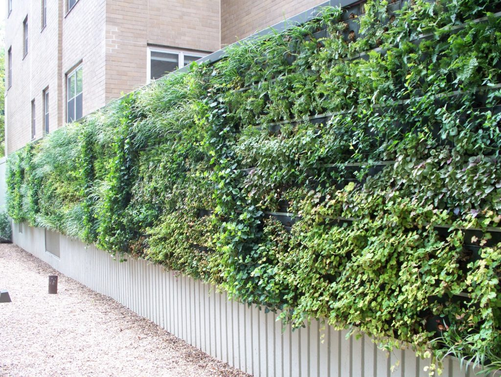 Natural Green Wall Outdoor