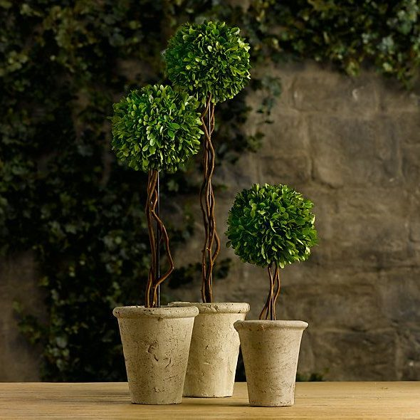 Indoor preserved shrubs pots